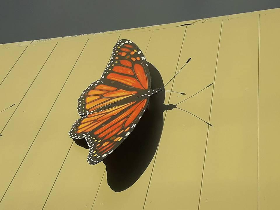 3D shadows from butterfly.jpg