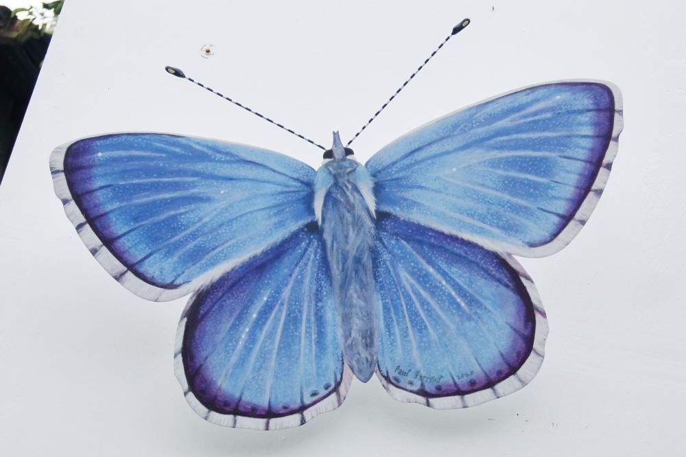 Blue Copper medium.jpg