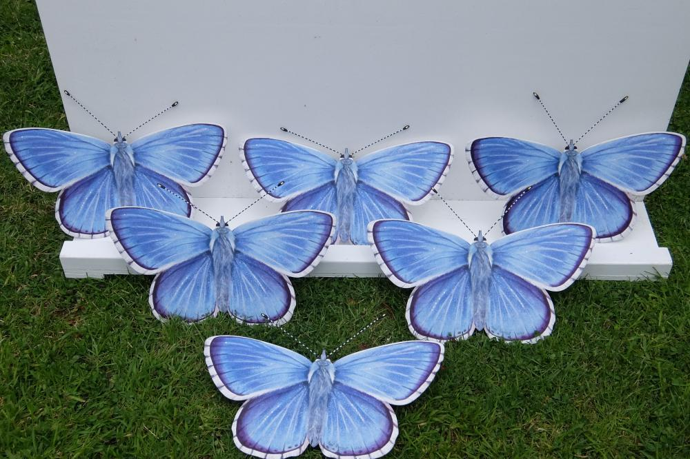 Blue Coppers lined up.jpg