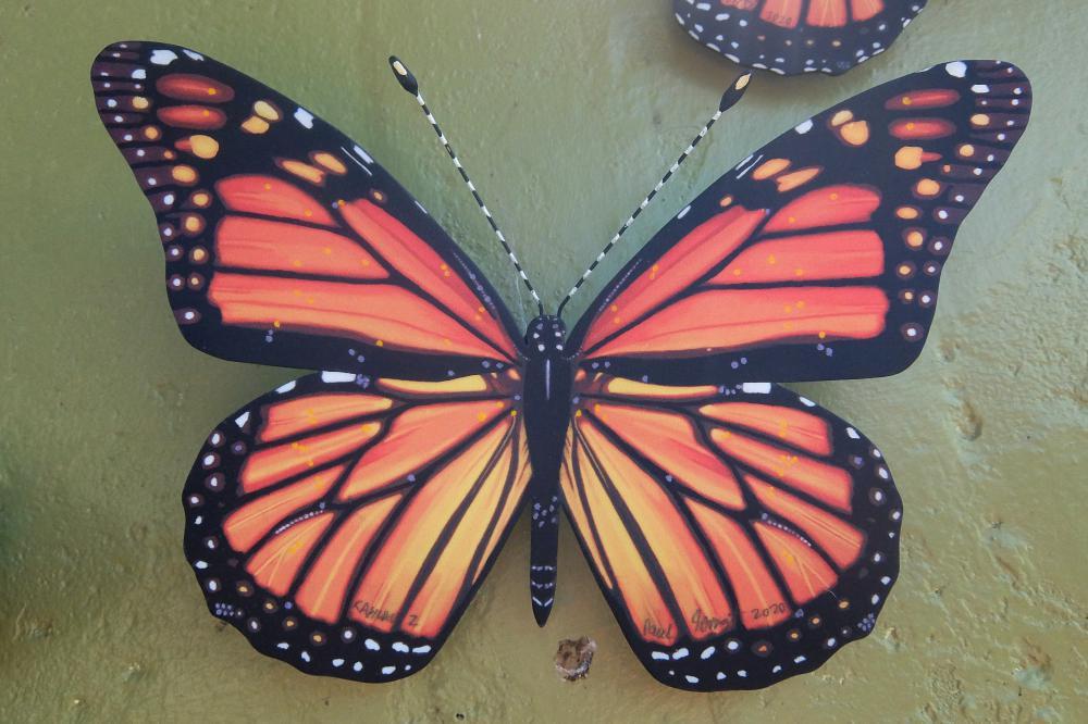 Monarch 2 sml 2020.jpg