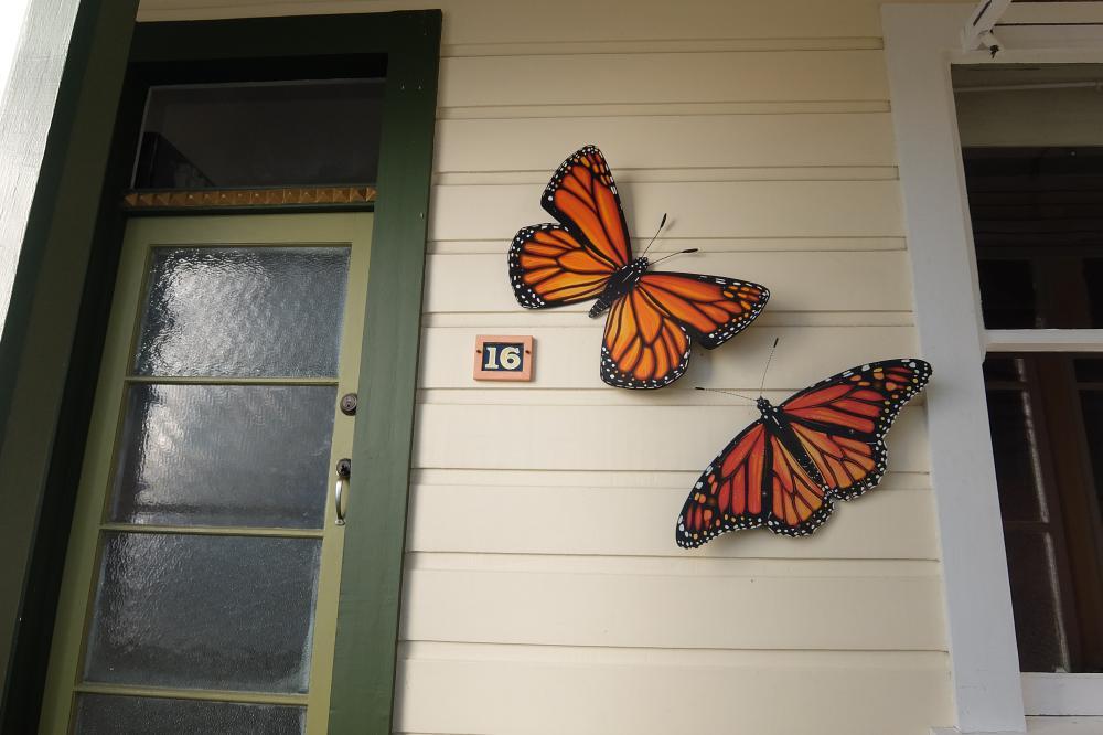 Monarchs in front porch.jpg