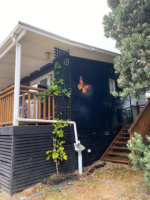 Waiheke Monarch at home.jpg